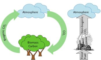 Fossil vs biogenic CO2 emissions | Bioenergy